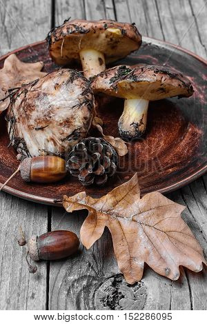 Plate Of Forest Mushrooms