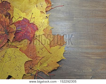 Autumn Composition, Several Maple Leaves