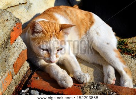 Street Cat Relax On Sunshine