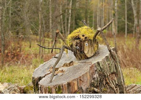 The spider climbed up on a stump and settled down to rest.