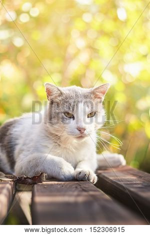 Old cat lying on bench and looking at camera blurry background with plenty of copy space