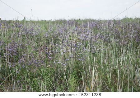 nice summer meadow with wild flowers