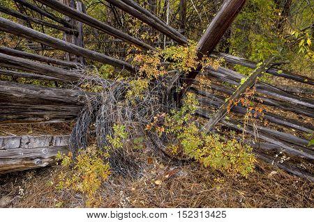 Barbed wire and livestock ramp in Okanogan county near Winthrop Washington.