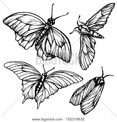 Monochrome black and white background with butterflies.