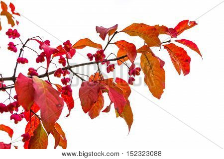 Small Red Berries Leaves Branch Bright Colorful Autumn Fall Season Edible Food Forest Woods Outdoors
