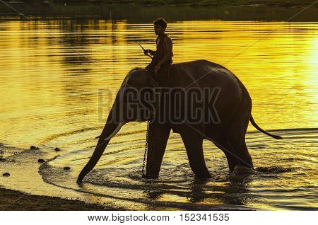 elephant playing in the river ,elephant show.
