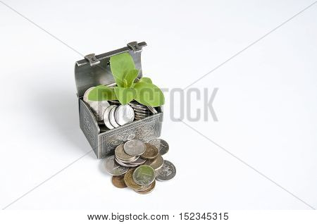 Next to the iron chest with coins and plant lie rubles