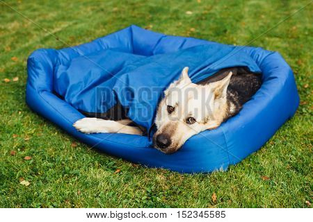 dog relaxing on his bed, green grass background