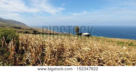 Home By Cornfield And Ocean