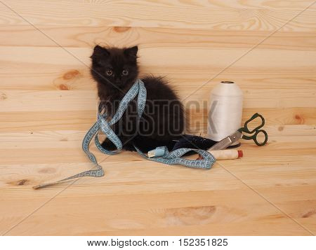Black cute kitten with items for sewing.