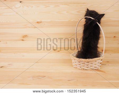 Cute black kitten in a basket on wooden background.