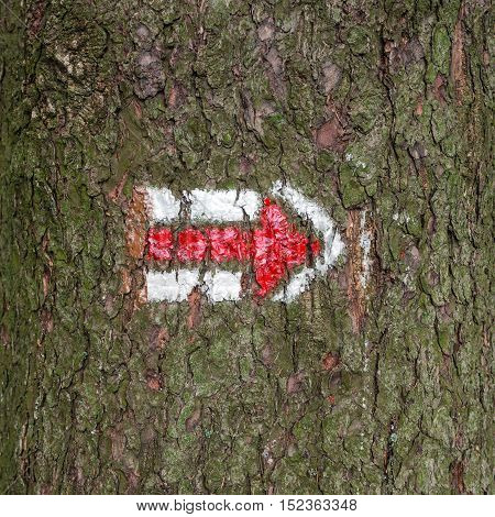Red and white hiking arrow sign on tree trunk bark wood, typical for czech tourism, providing guidence, touristic navigation or directions, simple