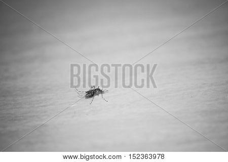 Mosquito On The Floor.