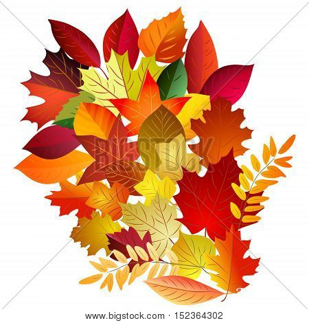 Vector illustration of color autumn leaves bouquet on white background