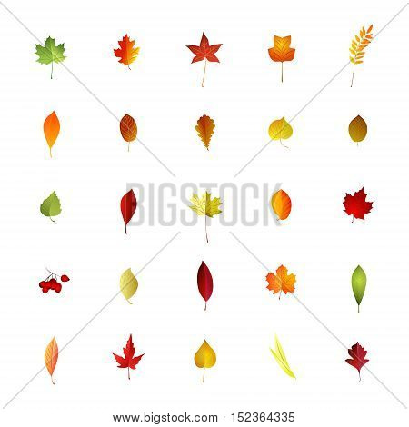 Set of autumn leaves on white background . Vector illustration
