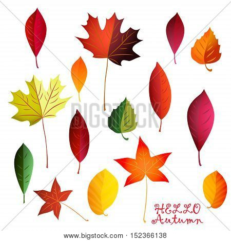 Vector set of color autumn leaves on white background .