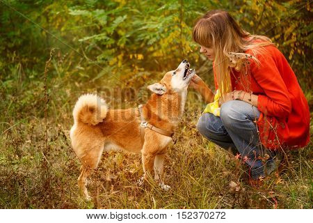 Girl scratching Shiba Inu dog in autumn park. Pet. Pedigree dog. Funny animals and their owners. Riot of colors of nature. Outdoor Activities.