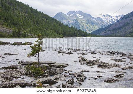 Tree on a rock in the water Multinskiye lake Altai mountains