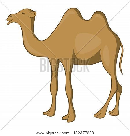 Camel icon. Cartoon illustration of camel vector icon for web design
