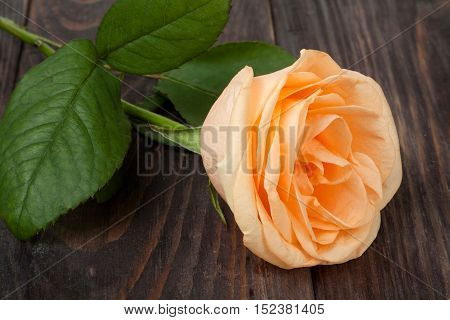 Peach rose with leaves on a dark wooden background.