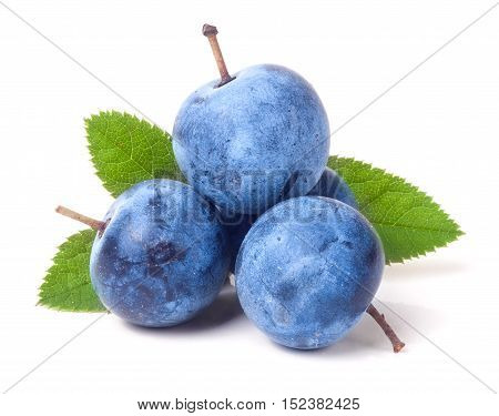 fresh blackthorn berries with leaves isolated on white background.