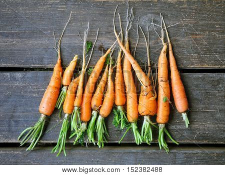Fresh carrots with roots on a dark brown wooden surface. Top view.