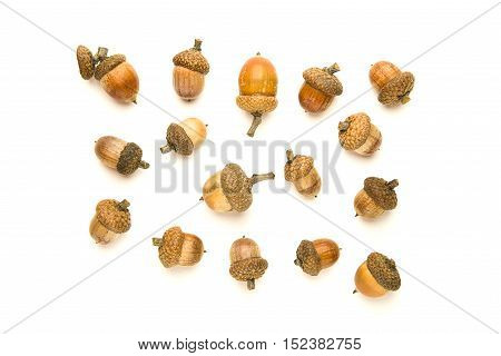 Many dried autumn acorns on over white