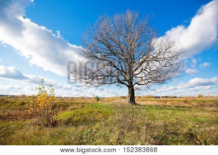 Autumn landscape with orange autumn oak tree in the field. Autumn nature -orange autumn oak in autumn sunny field. Picturesque autumn view of autumn nature. Autumn nature in sunlight