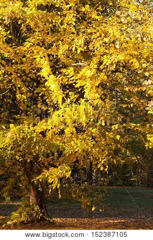 part tree branches with yellow autumn leaves in the background landscape of nature