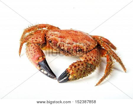 boiled red crab isolated on white background