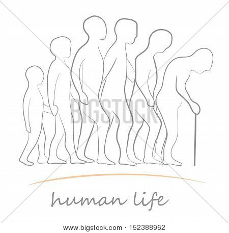 human life at different ages. vector illustration
