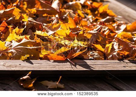 autumn yellow maple leaves lie on a wooden table gray with brown, natural appearance in park on a sunny day, the bright foliage, beautiful background, autumn landscape, october, table several boards