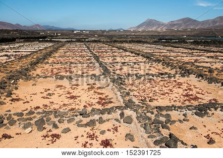 Lanzarote plantations between mountains, Canary Island, Spain