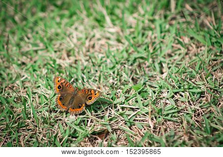 Coloured butterfly standing on green grass at daytime