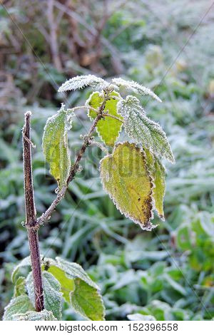The First Frosts