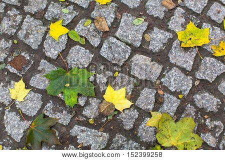 Yellow fallen leaves on the cobblestones, autumn texture.