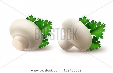 Vector Set of Fresh Whole White Portabello Agaricus  Champignons Mushrooms with Green Parsley Leaves Close up Isolated on White Background