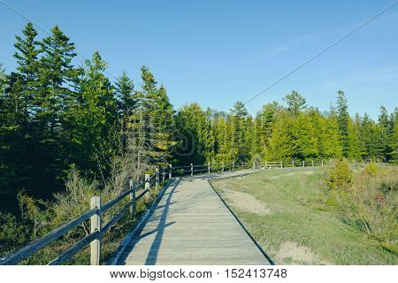 Boardwalk in forest at Presque Isle, MI, USA