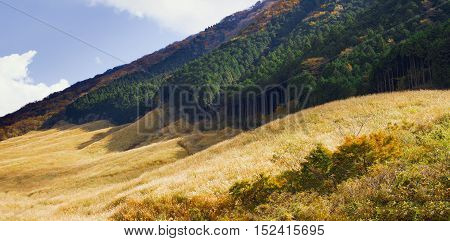 pampas grass field at sengokuhara hakone landscape