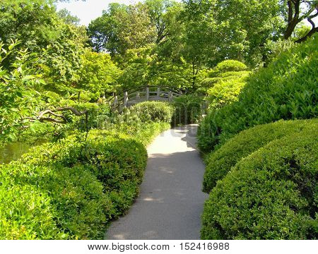 Pathway surrounded by green bushes with wooden bridge