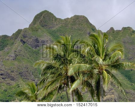 Hawaii palm trees and hillside spring time