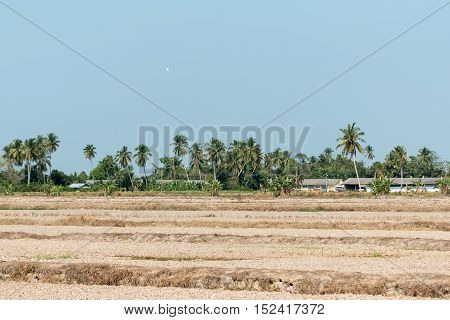View of a paddy field after harvest in rural Malaysia