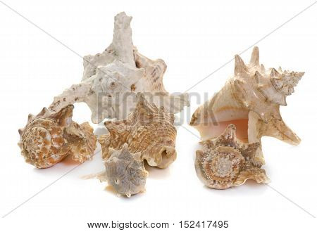beautiful shellfish in front of white background