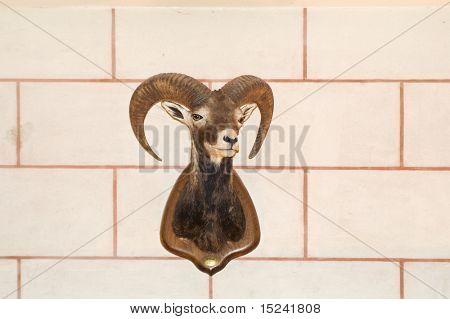 head of animal on wall