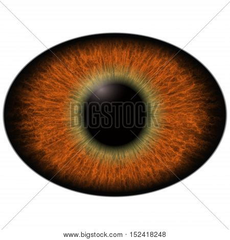 Lizard Eye.  Isolated Brown Elliptic Eye. Big Eye With Striped Iris