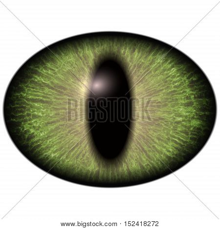 Bright Green Elliptic Eye, Narrowed  Iris. Big Lizard  Eye