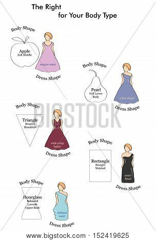 types of dresses suitable figure. types of female figures. vector illustration