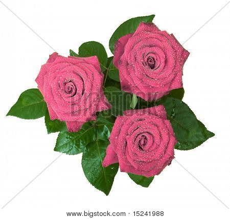 three rred roses on white