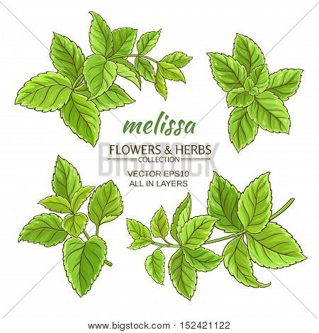 melissa herb vector set on white background