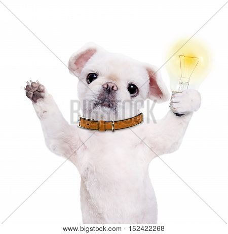 Dog holding a glowing light bulb. Isolated on the white.